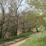Chemin allant à Mondouzil vers les Carbonières