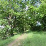 Chemin allant du Rivalet à Mondouzil